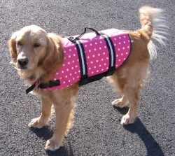 Doggy Life Jacket/Vest Large 50-90 Lbs, 30-37 …