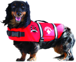 Neoprene Doggy Vest, L, Red, 50-90 lbs - Paws …