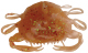 "Berkley Gulp! Saltwater 2"" Peeler Crab - Color: Amber Glow"