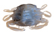"Berkley Gulp! Saltwater 2"" Peeler Crab - Color: Molting"