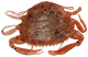 "Berkley Gulp! Saltwater 2"" Peeler Crab - Color: New Penny"